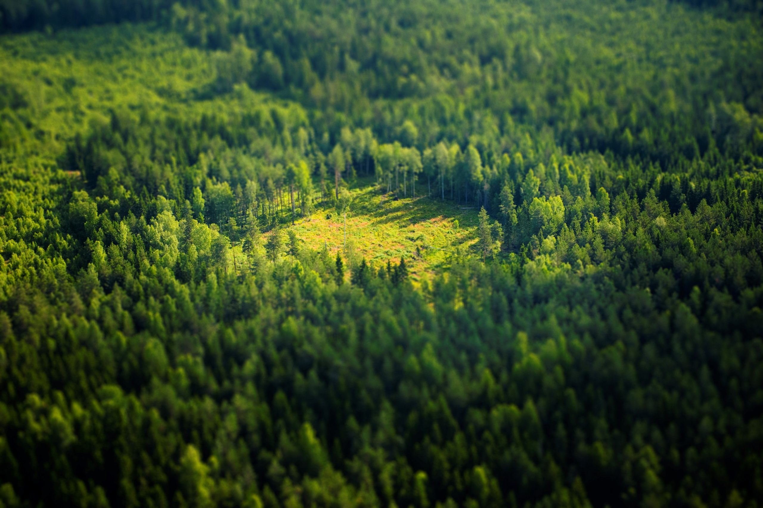 Forest glade seen from above. Photo.